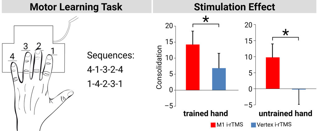 If the scientists stimulated the brain in the breaks between the short exercise sequences, the trained sequence could be better recalled by participants.