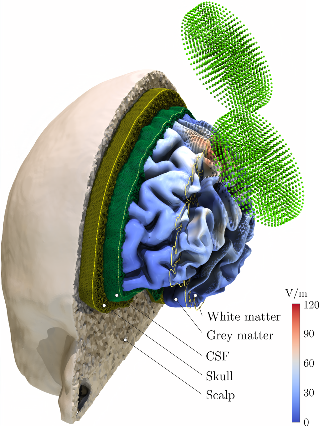Modeling of Transcranial Magnetic Stimulation