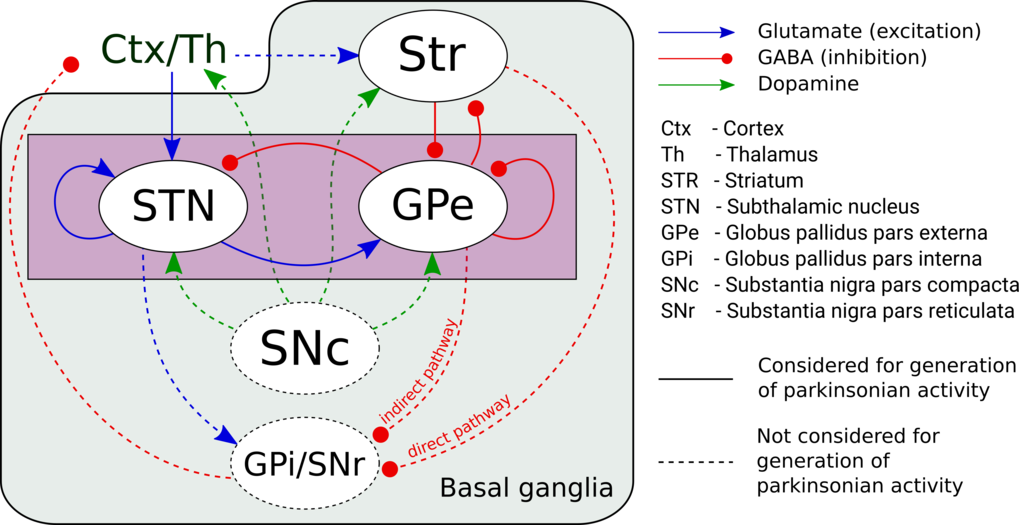 Modeling of Basal Ganglia