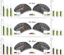 Recent auditory oddball studies using syntactic stimuli report a syntactic effect on the mismatch negativity (sMMN) around 100–200 ms. For morphosyntactic violations, this sMMN effect has been localized in the left superior temporal cortex.