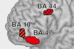A New Model to describe cognitiv processes in the brain