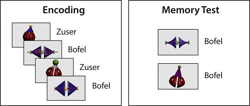 "<p>After a midday nap, babies are able to generalise the word label to new exemplars. Their brains differentiate between the correct and the incorrect label for a new version of a ""Bofel"" and a ""Zuser"". © MPI CBS</p>"