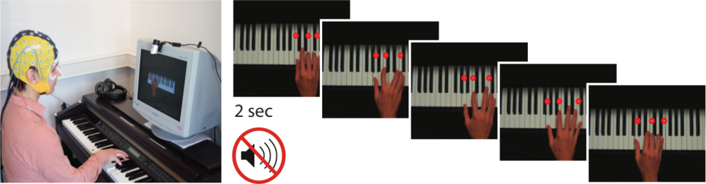 "In the study all pianists got to see a hand on a screen which played a sequence of chords on a piano scattered with mistakes in harmonies and fingering. The professional pianists had to imitate this hand and react accordingly to the irregularities while their brain signals were registered with EEG sensors on the head. <span class=""st"">©</span> MPI CBS"