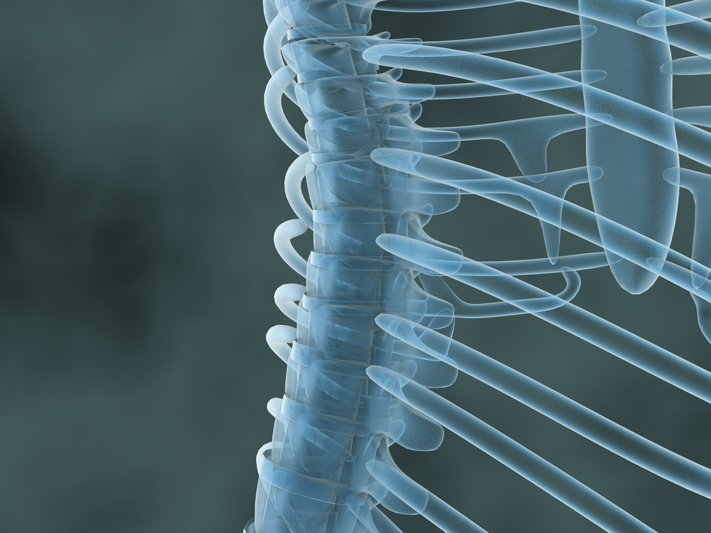 Not all pain is alike: How the spinal cord modulates our