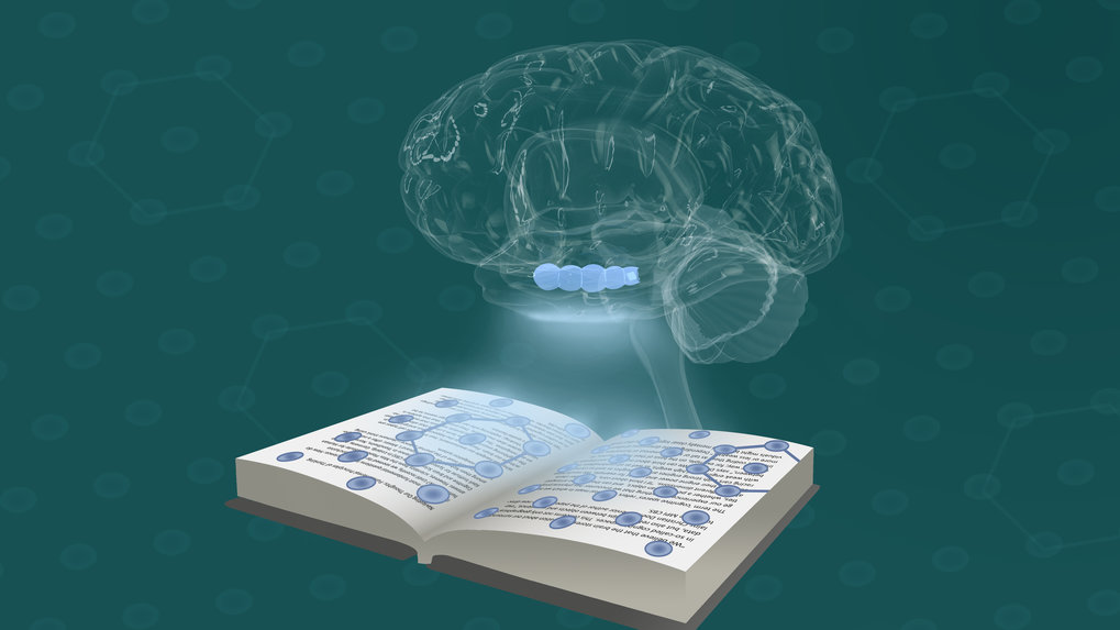 Navigating Your Thoughts: Fundamental Principles of Thinking | Science and Technology
